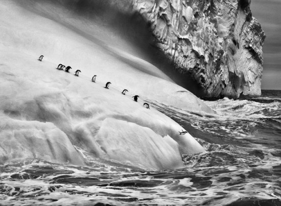 Isole South Sandwich, 2009 | © Sebastião Salgado/Amazonas Images