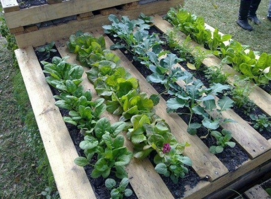 ideas-pallets-raised-garden-beds-1
