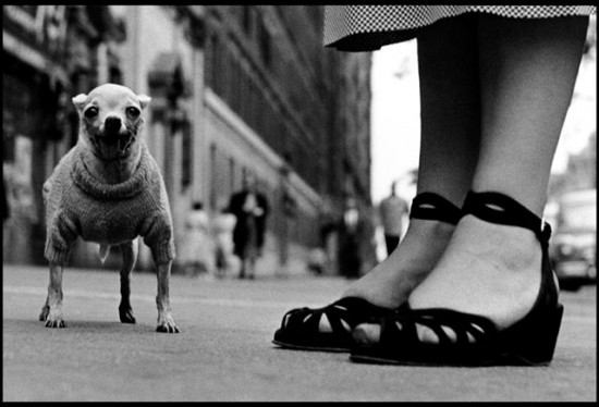 New York City, USA, 1946 Caption. Place. Year © Elliott Erwitt / Magnum Photos